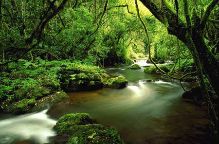 external image ForestScene1.jpg